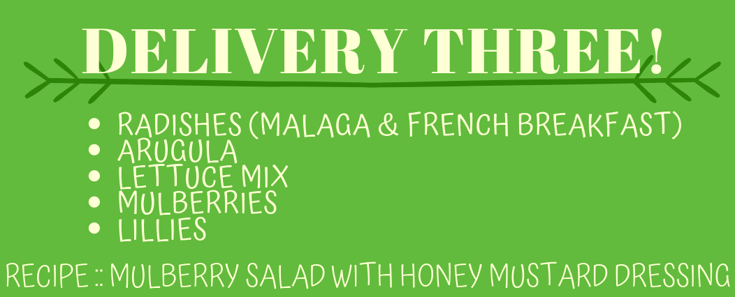 Delivery Three! (Recipe: Mulberry Salad with Honey Mustard Dressing)