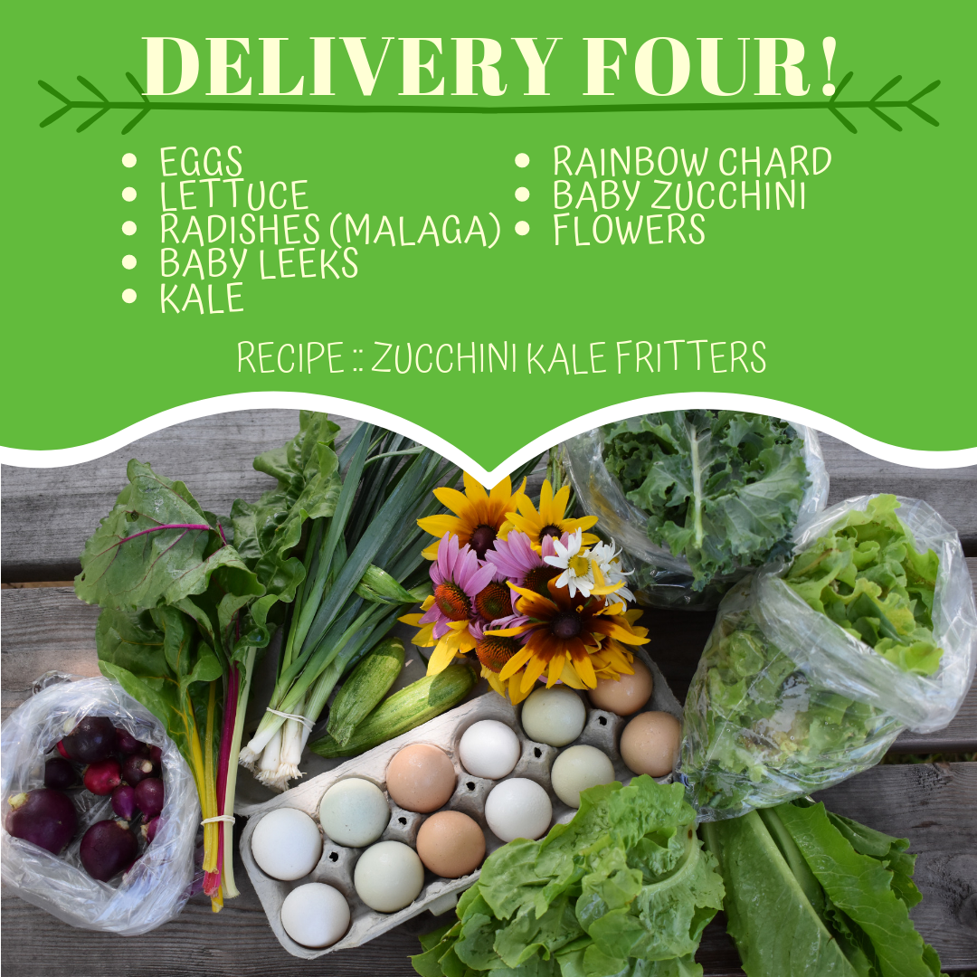 Delivery Four! (Recipe: Zucchini Kale Fritters)
